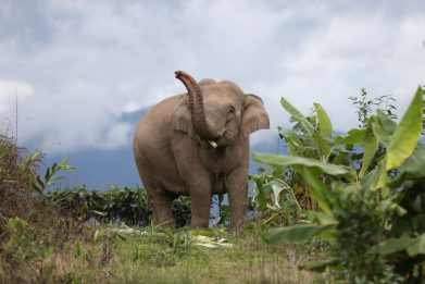 Il 12 agosto è la Giornata Mondiale dell'elefante