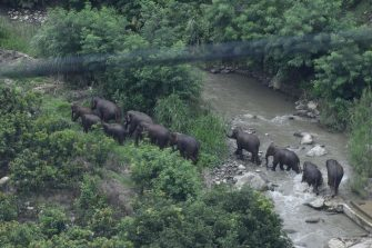 YUXI, CHINA - AUGUST 09: A herd of wild Asian elephants is seen at Yuanjiang County on August 9, 2021 in Yuxi, Yunnan Province of China. The herd of 14 wild Asian elephants began to return to its habitat. (Photo by Cui Yonghong/VCG via Getty Images)