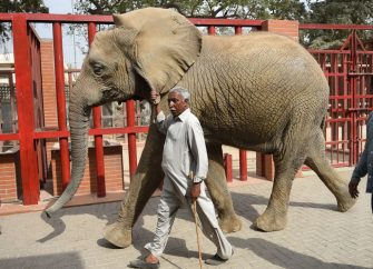 In this photograph taken on February 28, 2018, caretaker Yousuf Masit walks with an elephant at the Karachi Zoo in Karachi. - There are not enough vets at the Karachi Zoological Garden to give proper treatment to its more than 850 animals, many held in cages built over a century ago. (Photo by RIZWAN TABASSUM / AFP) / To go with Pakistan-social-zoo-animal,FEATURE by Ashraf Khan        (Photo credit should read RIZWAN TABASSUM/AFP via Getty Images)