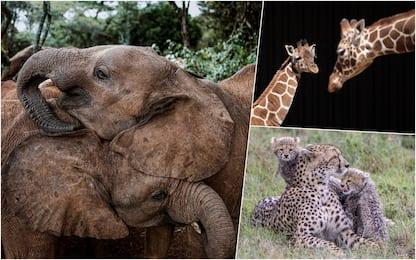 Kenya, animali in via di estinzione: il governo finanzia il censimento