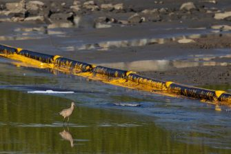 """A long-billed curlew walks through oily water near a containment boom as a 3,000-barrel oil spill, about 126,000 gallons, from an offshore oil rig reaches the shore and sensitive wildlife habitats in Newport Beach, California on October 3, 2021. - Authorities in California's beachfront Orange County cities scrambled  October 3, 2021 to mitigate the fallout from a major oil spill off the coast that caused """"substantial ecological impacts.""""  As of Sunday, the oil plume from the 126,000-gallon (480,000 liters) spill of post-production crude was an estimated 5.8 nautical miles (6.7 miles, 10 kilometers) long and stretched along the popular shorelines of Huntington Beach and Newport Beach, Huntington Beach city authorities said in a statement. (Photo by DAVID MCNEW / AFP) (Photo by DAVID MCNEW/AFP via Getty Images)"""