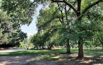 Parco urbano parchi urbani verde alberi prati prato città