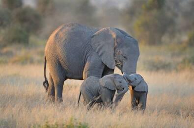 Bergamo, morta l'elefantessa Andra del Circo Rolando Orfei