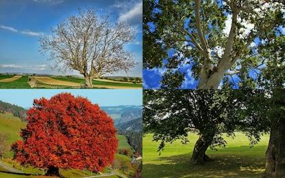 Giornata nazionale degli alberi, i più diffusi in Italia