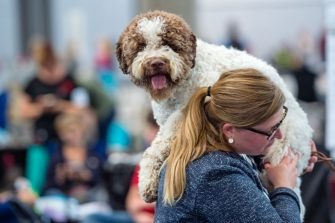 LEIPZIG, GERMANY - AUGUST 26: An owner and her dog of the breed 'Lagotto Romagnolo' during a competition at the 2018 Dog and Cat (Hund und Katze) pets trade fair at Leipziger Messe trade fair halls on August 26, 2018 in Leipzig, Germany. The weekend fair brings together dog and cat lovers from across the country for beauty and skills competitions as well as exhibitors showcasing the latest in pet food, toys and accessories. (Photo by Jens Schlueter/Getty Images)