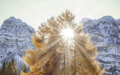 Dal Trentino alla Sicilia, le più belle foto delle foreste d'Italia