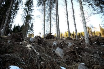 PANEVEGGIO, ITALY - NOVEMBER 30: A general view of the destroyed forest on November 30, 2019 in Paneveggio, Italy. Heavy rains ripped up the vast majority of Norway spruces of the Paneggio forest in October 2018. Huge efforts are currently underway to plant new trees to replace the uprooted ones. (Photo by Maria Moratti/Getty Images)