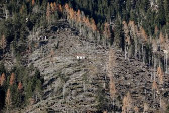 PANEVEGGIO, ITALY - NOVEMBER 30: A vast, ravaged portion of Paneveggio forest is seen on the flank of a mountain in the Dolomite mountain range on November 30, 2019 in Paneveggio, Italy. Heavy rains ripped up the vast majority of Norway spruces of the Paneggio forest in October 2018. Huge efforts are currently underway to plant new trees to replace the uprooted ones. (Photo by Maria Moratti/Getty Images)