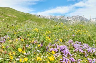 GRAN SASSO, ITALY - JUNE 12: Wild flowers at a meadow in the mountains on June 12, 2019 in Gran Sasso d'Italia, Italy. (Photo by EyesWideOpen/Getty Images)