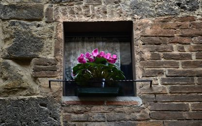 Dai ciclamini alle dalie, le fioriture che sbocciano in autunno