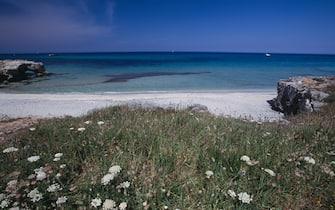 Mare, sabbia e arbusti alla spiaggia di Roca Vecchia, Puglia