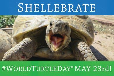 Giornata mondiale delle tartarughe, 5 curiosità sulla specie