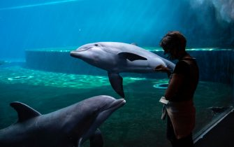 A woman wearing a face mask watches dolphins swim at the Aquarium of Genoa, Liguria, on May 22, 2020, as the country eases its lockdown after over two months, aimed at curbing the spread of the COVID-19 infection, caused by the novel coronavirus. - The Genova Aquarium is set to reopen on May 28 after over two months of lockdown. (Photo by MARCO BERTORELLO / AFP) (Photo by MARCO BERTORELLO/AFP via Getty Images)