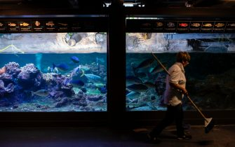 A cleaner walks past fish tanks at the Aquarium of Genoa, Liguria, on May 22, 2020, as the country eases its lockdown after over two months, aimed at curbing the spread of the COVID-19 infection, caused by the novel coronavirus. - The Genova Aquarium is set to reopen on May 28 after over two months of lockdown. (Photo by MARCO BERTORELLO / AFP) (Photo by MARCO BERTORELLO/AFP via Getty Images)