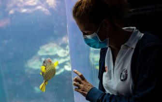 A keeper interacts with a fish at the Aquarium of Genoa, Liguria, on May 22, 2020, as the country eases its lockdown after over two months, aimed at curbing the spread of the COVID-19 infection, caused by the novel coronavirus. - The Genova Aquarium is set to reopen on May 28 after over two months of lockdown. (Photo by MARCO BERTORELLO / AFP) (Photo by MARCO BERTORELLO/AFP via Getty Images)