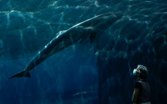 TOPSHOT - A woman wearing a face mask watches a dolphin swim at the Aquarium of Genoa, Liguria, on May 22, 2020, as the country eases its lockdown after over two months, aimed at curbing the spread of the COVID-19 infection, caused by the novel coronavirus. - The Genova Aquarium is set to reopen on May 28 after over two months of lockdown. (Photo by MARCO BERTORELLO / AFP) (Photo by MARCO BERTORELLO/AFP via Getty Images)