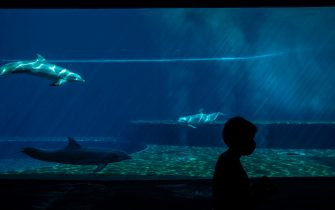 A woman wearing a face mask is silhouetted against dolphins at the Aquarium of Genoa, Liguria, on May 22, 2020, as the country eases its lockdown after over two months, aimed at curbing the spread of the COVID-19 infection, caused by the novel coronavirus. - The Genova Aquarium is set to reopen on May 28 after over two months of lockdown. (Photo by MARCO BERTORELLO / AFP) (Photo by MARCO BERTORELLO/AFP via Getty Images)