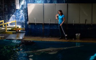 A keeper feeds sharks with fish at the Aquarium of Genoa, Liguria, on May 22, 2020, as the country eases its lockdown after over two months, aimed at curbing the spread of the COVID-19 infection, caused by the novel coronavirus. - The Genova Aquarium is set to reopen on May 28 after over two months of lockdown. (Photo by MARCO BERTORELLO / AFP) (Photo by MARCO BERTORELLO/AFP via Getty Images)