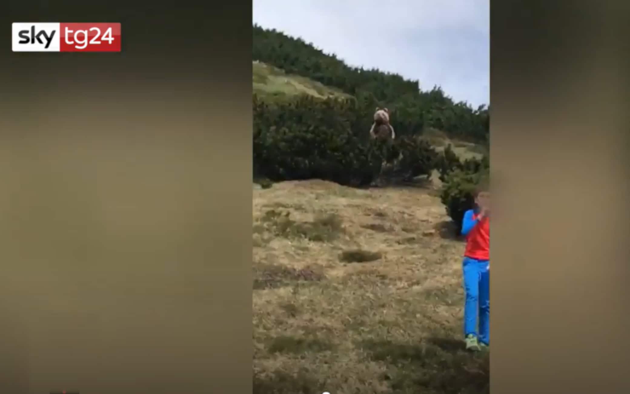 Trentino, orso, bambino