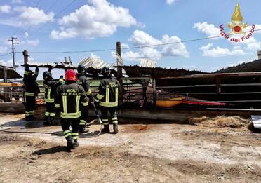 Meteo, forte maltempo a Ferrara: danni e alberi caduti. FOTO