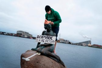 """An activist of the Danish environmental Party 'Vegan Party' (Veganerpartiet) dresses the Little Mermaid statue like a pig wearing a banner reading """"Denmark is a pig factory"""" during an happening at Langelinie in Copenhagen, Denmark on January 29, 2020. - The happening is a protest against room conditions for pigs in the Danish farming production. (Photo by Liselotte Sabroe / Ritzau Scanpix / AFP) / Denmark OUT (Photo by LISELOTTE SABROE/Ritzau Scanpix/AFP via Getty Images)"""