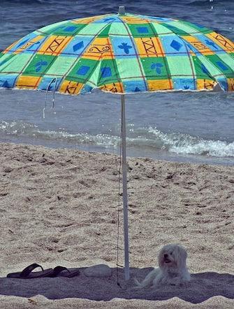 Un cane all'ombra sotto l'ombrellone aspetta il ritorno della sua padrona, lungo la spiaggia di Cabo de Gata, Spagna.   ANSA / Jose Manuel Vidal. /