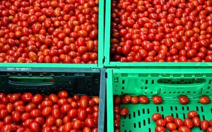 Falso pomodoro italiano, sequestrate 4.477 tonnellate di conserva