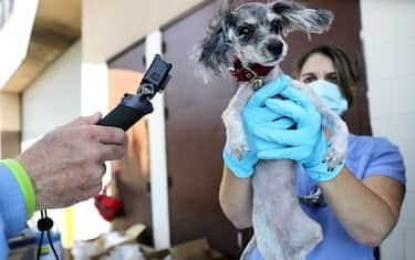 GettyImages-veterinari 1