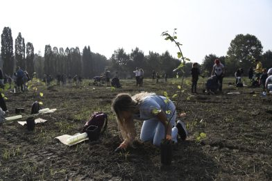 Forestami, 3 milioni di alberi entro il 2030
