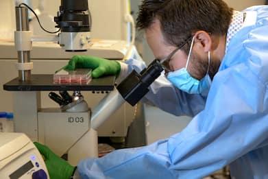 Carcinoma ovarico invasivo, individuato il meccanismo base: lo studio