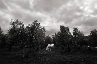 """Nomadelfia, comunità """"bolla"""" fuori dal Covid. Foto di Enrico Genovesi"""