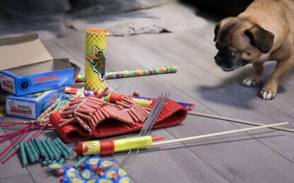 Botti di Capodanno, il decalogo per difendere gli animali