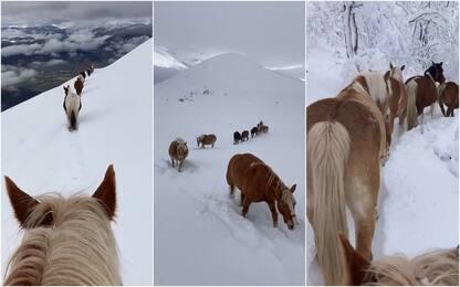 La transumanza dei cavalli nella neve da Castelluccio a Norcia. FOTO