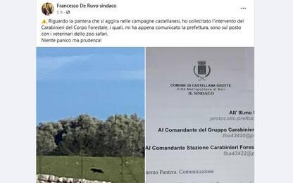 """Pantera nera avvistata in provincia di Bari, il sindaco: """"Prudenza"""""""