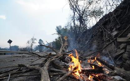 Incendi in Sardegna, morto Angelo il cane pastore simbolo dei roghi