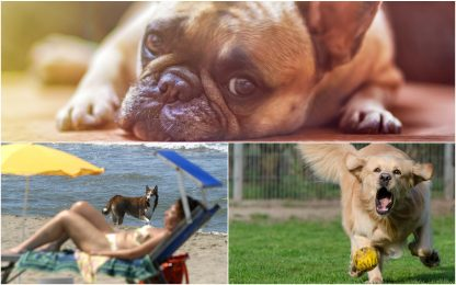 "Cani, aumenta rischio di ""colpi di calore"": 10 consigli per prevenirli"