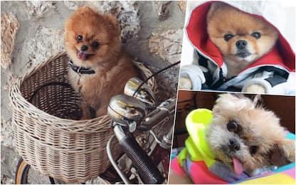 Giornata mondiale dei cani, i più famosi su Instagram