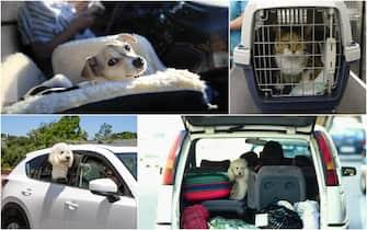 Animali domestici, macchina, moto