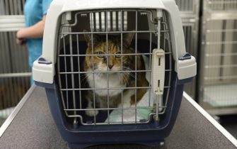 TO GO WITH AFP STORY BY ISABELLE TOUSSAINT - A cat sits his cage prior to undergo a cancer treatment at the Eiffelvet veterinary clinic on 22 September, 2014 in Paris.   AFP PHOTO / LIONEL BONAVENTURE        (Photo credit should read LIONEL BONAVENTURE/AFP via Getty Images)
