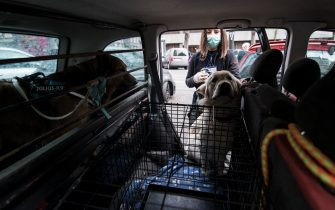 """TURIN, ITALY - APRIL 15: Manuela Vizzini, volunteer at the """"Homeless not Dogless"""" NGO association, puts a dog into her car on April 15, 2020 in Turin, Italy. """"Homeless not Dogless"""" is an NGO association who help dogs of the homeless and dogs of people suffering from Coronavirus (COVID-19). The Italian government continues to enforce the nationwide lockdown measures to control the spread of COVID-19, even if some businesses categories are slowly reopening. (Photo by Stefano Guidi/Getty Images)"""