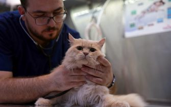 A member of the veterinary staff cares for a cat at Pet Zone, a pet health center in the Jordanian capital Amman on October 1, 2019. - Where strays were once mostly left to scavenge for food, Jordanians, in a new trend in the Arab kingdom are increasingly willing to foot steep bills to care for beloved dogs and cats. (Photo by Khalil MAZRAAWI / AFP) (Photo by KHALIL MAZRAAWI/AFP via Getty Images)
