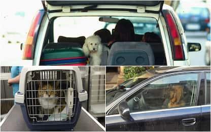 Portare cani e gatti in auto e moto in modo sicuro: regole e consigli