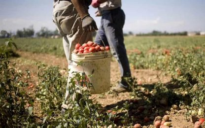 Decreto Sostegni bis, via al bonus lavoratori agricoli 2021