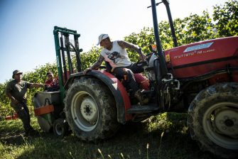 VERDUNO, ITALY - OCTOBER 16: General views during the grape harvest for Barolo wine on October 16, 2019 in Verduno, Italy. (Photo by Stefano Guidi/Getty Images)