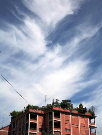 GIARDINO SUL TERRAZZO (MILANO - 2010-05-30, Eugenio Grosso) p.s. la foto e' utilizzabile nel rispetto del contesto in cui e' stata scattata, e senza intento diffamatorio del decoro delle persone rappresentate