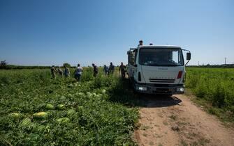 Braccianti agricoli rumeni e africani impegnati nella raccolta delle angurie nel sud Italia. L'agricoltura è uno dei settori che non si è mai fermato neanche nel lockdown a causa del coronavirus. In questo periodo c'è una forte richiesta di manodopera.