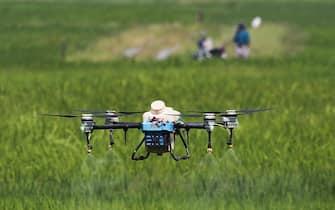 Un drone spruzza pesticidi su risaie ad Alor Setar, Malesia, 27 dicembre 2020