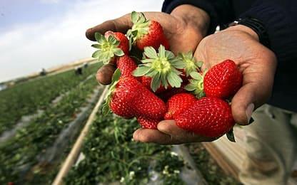 Agricoltura: in arrivo 150 mila lavoratori stranieri stagionali