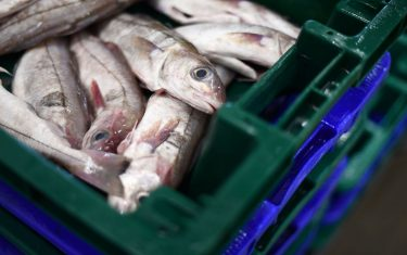 This photograph taken on November 12, 2020 shows fishes placed in crates ready for market at the outcry of the port of Roscoff, western France. (Photo by Fred TANNEAU / AFP) (Photo by FRED TANNEAU/AFP via Getty Images)