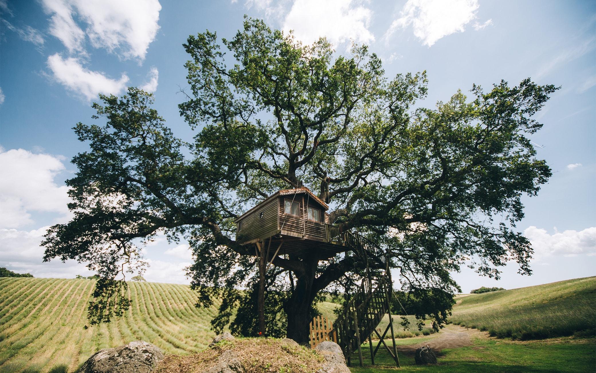 La casa sull'albero dell'agriturismo La Piantata nel Viterbese
